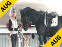 Arthur Kottas<br> WorkinHand<br> Baryshnikov<br> KWPN<br> by: Gribaldi<br> Owner: Heidi Knipe<br> 4 yrs. old Stallion<br> Training:Training Level<br> Duration:14 minutes