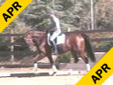 Volker Brommann Riding & Lecturing Optimist 10 yrs. old Gelding KWPN Training: 4th Level Duration: 36 minutes