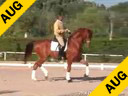Juan Matute<br>Riding & Lecturing<br>Wie Atlantico<br>Hanoverian<br>7 yrs. old Gelding<br>Training Prix St. George<br>Duration: 30 minutes