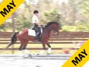Betsy Steiner<br>Assisting<br> Megan McKoy<br>Ferrari<br>Holsteiner<br>5 yr. old Gelding<br>Training: 1st Level<br>Duration: 36 minutes