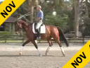 USDF APPROVED<br>University Accreditation<br>Available on DVD No.40<br>Day 2<br>George Williams<br>Riding & Lecturing<br>Favore<br>7 yrs. old Westfalen<br>Training: 2nd Level<br>Duration: 34 minutes