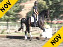 USDF APPROVED<br> University Accreditation<br> Available on DVD No.43<br>Steffen Peters<br> Riding & Lecturing<br> Magic Weltino<br>Westfalian<br> 8 yrs. old Gelding<br> Training: PSG/I1<br> Owner: Jen & Bruce Hlavacek<br> Duration: 39 min