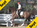 Geunter Seidel<br>Riding and Lecturing<br>UII<br>by Jazz<br>8 yrs. old KWPN<br>Training: 4th Level<br>Duration: 45 minutes