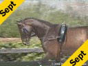 Bo Jena<br>Long Lining Session<br>Pepito<br>by: Zeolite<br>KWPN<br>7 yrs. old Gelding<br>Duration: 41 minutes