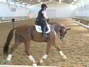 IDCTA The Illinois Dressage & Combined Training Assosiation Presents<br> Jan Brink<br> Assisting<br> Julie Julian<br> Proteus<br> Danish Warmblood<br> 8 yrs. old gelding<br> Training: PSG<br> Duration:34 minutes