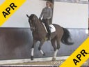 Markus Gribbe<br> Assisting<br> Patricia Von Merteld<br> Extra Class<br> 10 yrs. old Mare<br> Oldenburg<br> by: Ex Libres<br> Owner:Patricia Von Merteld<br> Training: PSG Level<br> Duration: 23 minutes