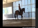 Day 3<br> Mary Walness<br> Assisting<br> Judy Greene<br> Riding Celius<br> Holsteiner<br> 9 yrs. old<br> Training: 1st Level<br> Duration: 20 minutes
