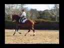 Charlotte Bredahl<br> Riding & Lecturing<br> Komo<br> 13 yrs. Old<br> Dutch Warmblood<br> Training: GP<br> Owner: Kathy &Tom Pavlich<br> Duration: 30 minutes
