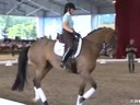 GDFNA Global Dressage Forum North America<br> Steffen Peters<br> Riding & Lecturing<br> & Assisting<br> Jamie Kment<br> Zania<br> 9 yrs. Old Mare<br> Duration: 40 minutes