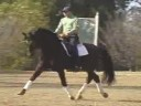 Jan Ebeling<br> Riding & Lecturing<br> Louis Ferdinand<br> Hanoverian<br> 6 yr. old Stallion<br> Training: 2nd/ 3rd Level<br> Duration: 42 minutes