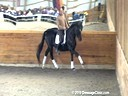 SFMWNY Maplewood Warmbloods<br>Monica Theodorescu<br> Assisting<br> Micheal Klimke<br> Sabati<br> Oldenburg<br> by: Sandro Hit<br> 5 yrs. old Gelding<br> Training: 2nd/3rd Level<br> Owner: Nancy Holonesko<br> Duration: 29 minutes