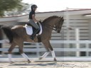 Pam Goodrich<br> Riding & Lecturing<br> Donnerhit<br> Bavarian<br> By: Donnerhall<br> 10 yrs. old Gelding<br> Training: Grang Prix<br> Owner: Pam Goodrich/Marcia Boles<br> Duration: 30 minutes