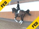 Cristoph Hess<br>Assisting<br>Carola Koppelmann<br>San Diego<br>Mecklenburg<br>by: Sansisco<br>5 yrs. old Gelding<br>Training: FEI 5 yrs. old<br>Duration: 57 minutes
