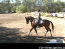 U.S. Trainers & Judges Young Horse Forum<br>Day 1<br> Dr. Dieter Schule<br> Assisting<br> Skyler Evans<br> Exemplar<br> by: Erhentusch<br> Westfalen<br> 6 yrs. old Gelding<br> Duration: 28 minutes