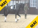 Markus Gribbe<br> Riding & Lecturing<br> Dante Weltino<br> by: Danone<br> 3 yrs. old Stallion<br> Oldenburg<br> Training: Training Level<br> Duration: 29 minutes