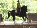 The Georgia Dressage & Combined Training Association<br>Day 1<br> Guenter Seidel<br> Assisting<br> Laura Wharton<br> Zandor<br> by: Florencio<br> 8 yrs. old  Dutch Gelding<br> Training: PSG/1-1<br> Duration: 41 minutes